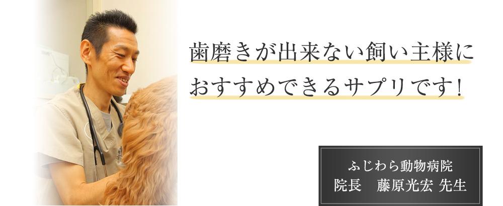 歯磨きが出来ない飼い主様におすすめできるサプリです! ふじわら動物病院 院長 藤原光宏先生